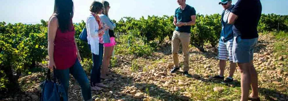 A guided walk into the vineyards with explanations about the grape varieties, climate and soils specific to Châteauneuf-du-Pape.