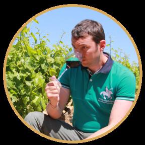 romain-provence-and-wine